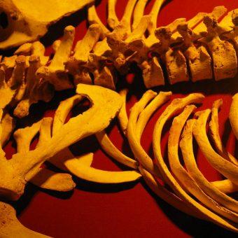 Photograph of human skeleton
